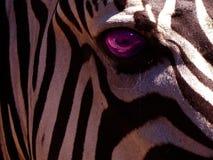 zebra oko Zdjęcie Stock
