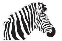 Zebra  outline silhouette Stock Image