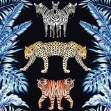 Zebra panther tiger mirror blue leaves black background pattern Stock Images