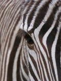 Zebra - particolare fotografie stock