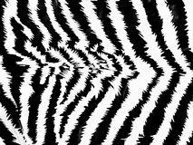 Zebra pattern Royalty Free Stock Image