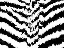 Zebra pattern Stock Photography