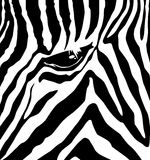 Zebra pattern Royalty Free Stock Image