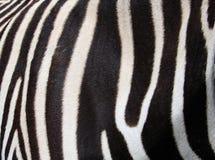 Zebra pattern Royalty Free Stock Photography