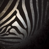 Zebra pattern, African background. Royalty Free Stock Image