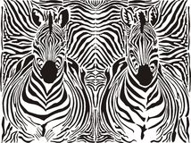 Zebra pattern background royalty free illustration