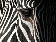 Zebra eye closeup Royalty Free Stock Photography