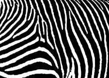 Zebra pattern large. Black and white zebra pattern background with simple design Royalty Free Stock Photos
