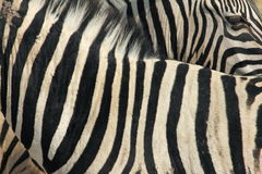 Zebra Pattern Royalty Free Stock Photography