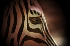 The Zebra pattern Royalty Free Stock Photos