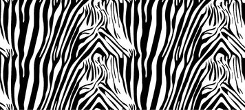 Zebra pattern Stock Illustration