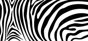 Free Zebra Pattern Texture Repeating. Simple Pattern, Black Line For Textile Design Fabric. Royalty Free Stock Photos - 138419138