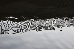 Zebra pattern on water Stock Image