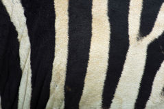 Zebra Patterns Stock Images