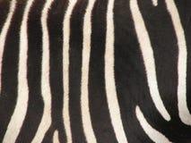 Zebra-Pelz-Muster lizenzfreie stockfotografie