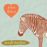 Zebra with place for text Stock Photos