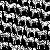 Zebra povtorila Stock Photo