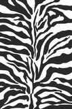 Zebra print. Background or pattern Royalty Free Stock Images