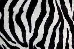 Zebra print Royalty Free Stock Images