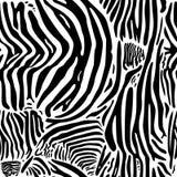 Zebra print pattern. Royalty Free Stock Photo