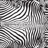 Zebra print pattern Royalty Free Stock Photo