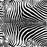 Zebra print pattern Royalty Free Stock Images