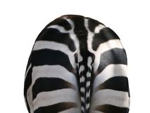Zebra, rückseitige Ansicht Lizenzfreie Stockfotos