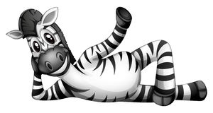 A zebra resting Stock Photos