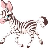 Zebra running bonito do bebê Imagens de Stock