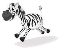A zebra running Stock Images