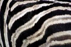 Zebra's Pattern Royalty Free Stock Images