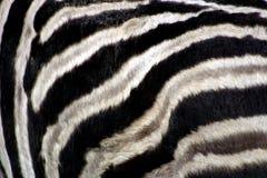 Zebra's Pattern. Close up on a zebra's side Royalty Free Stock Images