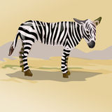 Zebra in savanna Stock Photo