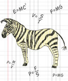 Zebra in a school notebook Stock Photography