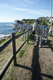 Zebra Sculptures by the Sea Bondi Beach. Zebras at on of the Entrances to Sculptures by the Sea Bondi Beach with One of the Scultures featured in the Sculptures royalty free stock photo