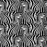 Zebra seamless pattern. Royalty Free Stock Image
