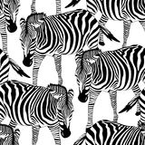 Zebra seamless pattern. Savannah Animal ornament. Stock Images