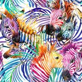 Zebra seamless pattern. tropical nature watercolor illustration. Royalty Free Stock Photo