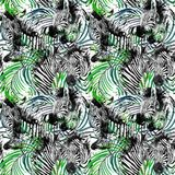 Zebra seamless pattern. tropical nature watercolor illustration. Stock Images