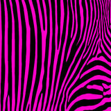 Zebra seamless print. Royalty Free Stock Photos