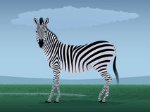 Zebra and a season of rains Royalty Free Stock Images