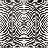 Zebra senza giunte della pelle della priorità bassa, illustratio di vettore illustrazione di stock