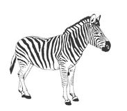 Zebra silhouette Royalty Free Stock Photography