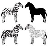 Zebra silhouettes set. Set of various zebra silhouettes Royalty Free Stock Images