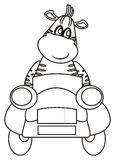 Zebra sits  in car Stock Photography