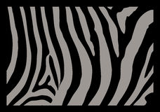 Zebra Skin. A detail in black and grey of Zebra skin Royalty Free Stock Photography