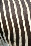 Zebra skin Royalty Free Stock Images