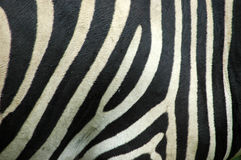 Zebra skin Stock Photo