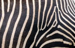 Zebra skin Royalty Free Stock Photos