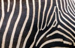 Zebra skin. Close up of a Zebra skin Royalty Free Stock Photos